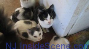 Cats peer up at the camera as they are visited by the NJSPCA. Image courtesy of the NJSPCA.