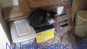 A cat is perched on a box, within its current home in Stillwater. Image courtesy of the NJSPCA.
