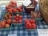 Fresh produce from DanaRay Farms at the Hopatcong Farmers' Market. Photo by Jennifer Jean Miller.