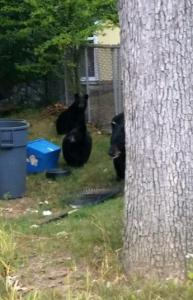 Bears in Hopatcong Borough, photo courtesy of the Hopatcong Police Department.