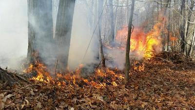 Fire caused from hot ashes placed in the woods. Photo courtesy of the Hopatcong Police Department.
