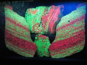 Fluorescent minerals glowing. Image courtesy of Venturing Crew 276.