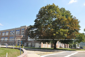 The oak tree graces the Franklin Borough School. Photo by Jennifer Jean Miller.