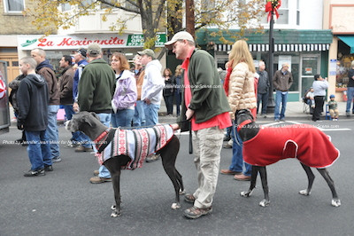 A pair of Great Danes attired smartly for the occasion. Photo by Jennifer Jean Miller.